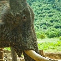 Canoeing & Elephant Trekking, Khao Sok, Thailand
