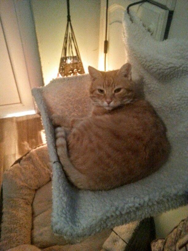 Pussycat hammock