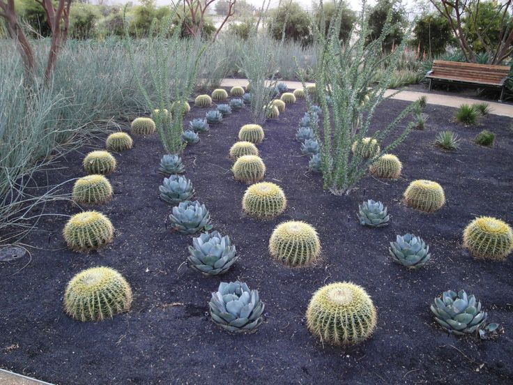 132 best images about gardening on pinterest gardens for Brown lava rock for landscaping