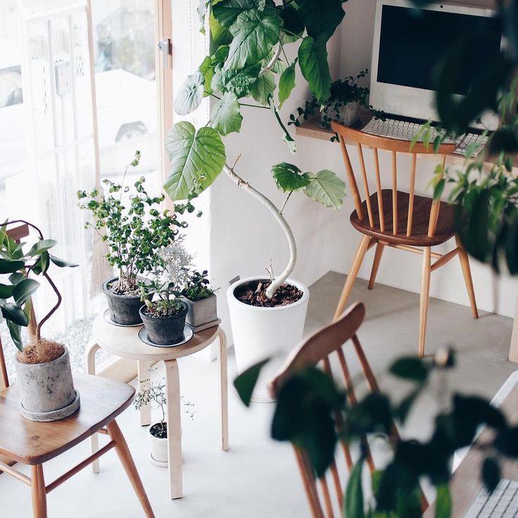 ・  某雑誌の撮影のため、  8時だヨ!全員集合!した我が家のグリーンズ。  ・  いつの間にか、 小さい子から大きい子まで合わせると 10以上。  もっと増やしたいけど、もっと上手にお世話できるようにならないと。  ・  外にいたユーカリさんを枯らした犯人は、僕です。  ・  #庭の家 #観葉植物  #植物のある暮らし  ・  #mygoodroom#vsco#vscocam#vscoflowers#flower#instagood#photooftheday#IGersJP#home#interior#平屋#新築#コンテナデザイン#旭ホームズ#暮らし#インテリア#マイホーム#マイホーム記録#リビング#撮影#雑誌#土間#モルタル#漆喰#タナクリーム#塗り壁