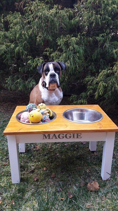 Maggie az itatótáljába, a játékait gyűjti inkább.