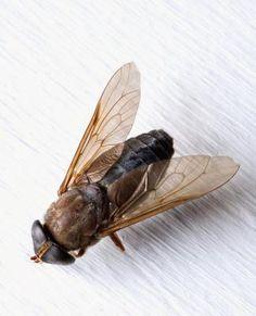 Un remedio casero para deshacerse de moscas de la fruta y mosquitos en el patio