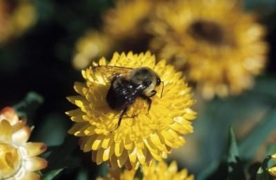 At-Home Bee Repellents    http://www.ehow.com/info_8579993_athome-bee-repellents.html#