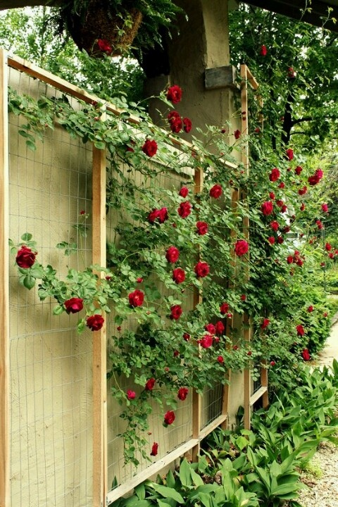 Add trellis along back fence to hide the chainlink gardening pinterest fences gardens and - Garden ideas to hide fence ...