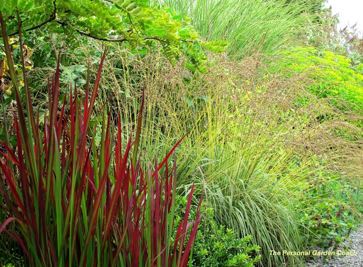 17 best images about ornamental grass on pinterest - Kleine lay outs het oppervlak ...