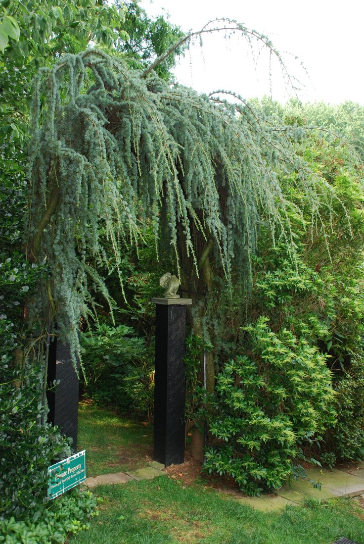 23 best trees images on pinterest gardens landscaping ideas and