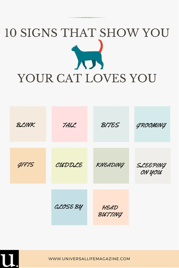10 Signs that show you your cat Loves you - Universal Life Magazine