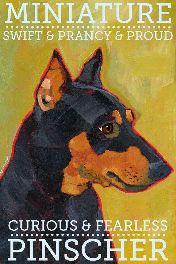 Min Pin art print. This one looks so much like Greta it's amazing!
