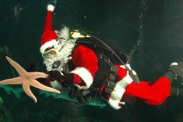 Vancouver Aquarium's Scuba Claus goes diving in December to swim amidst the sealife