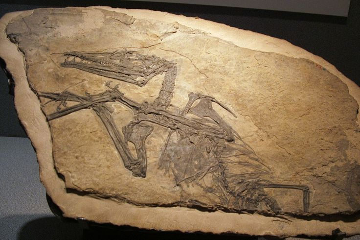 Un savant local l-a indentificat ca un pterosaur preistoric. Rocile unde a fost descoperit animalul datau de peste un milion de ani.