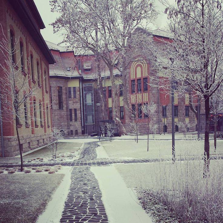 Winter on #campus @ibsbudapest ❄❄❄