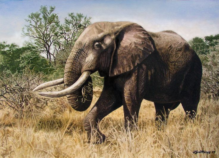 african elephant relationship with other species concept