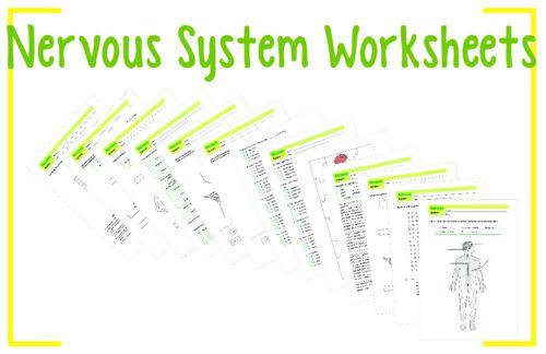 Nervous System Worksheet 1