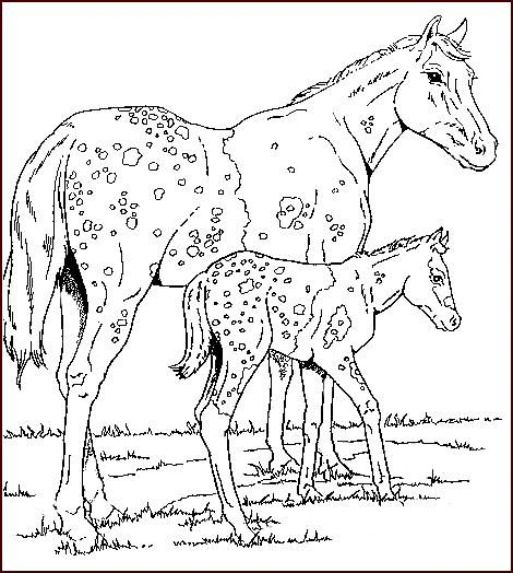 Coloring In Pages Horses : 305 best color: horses donkeys mules and tack images on pinterest