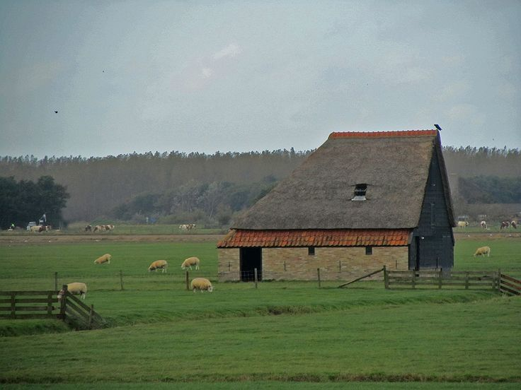 Schaapskooi op Texel