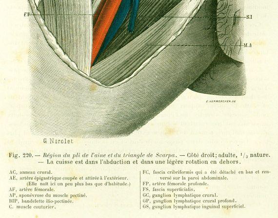 AUTHENTIC 118 years old engraving.  Original antique print (not a copy) edited by Faculté de Medecine de Paris France in 1897.  Leaf size is aprx : 17cm x 26cm (6.6 in x 10... #surgery #tillaux #anatomy #medico-legal #inguen #leg