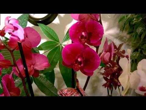 Орхидея Фаленопсис_ Уход_ Коротко о главном - YouTube