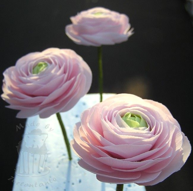 Ranunculus out of gumpaste