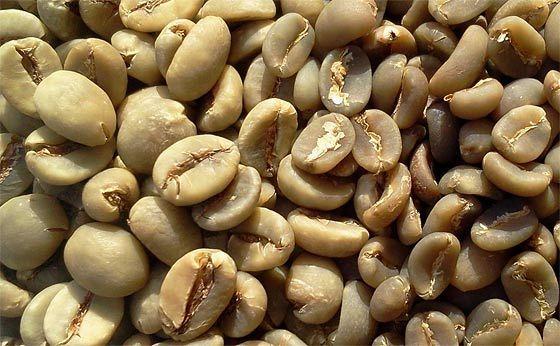 a0b4eda488226c8b8017c9db22c9acf1 Green Coffee Beans For Slimming How To Prepare Green Coffee Beans For Weight Loss In Hindi
