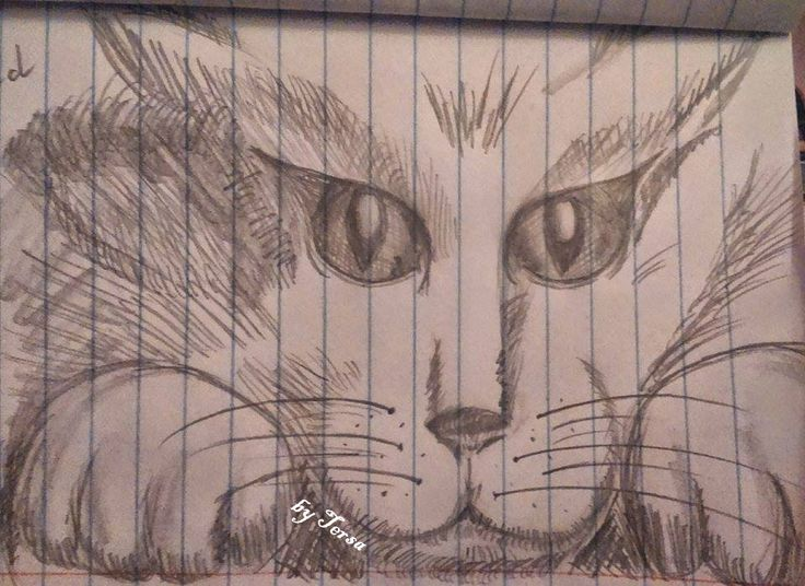 sketches, kitty, fluffy cat with big eyes