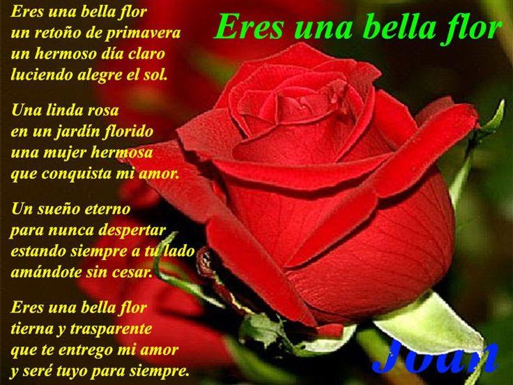 Rosas con poemas de amor para celular
