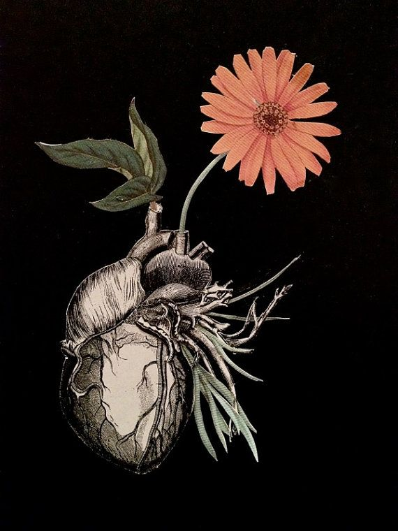 Roots surreal anatomy heart collage art by bedelgeuse                                                                                                                                                                                 Mais