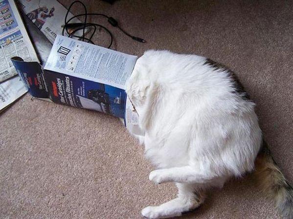 Poor Life Decisions Cats – 40 Pics