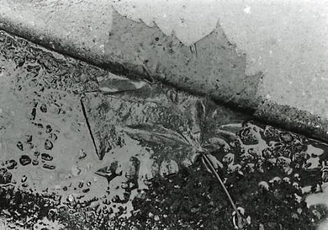 yasuhiro ishimoto. leaf 1988