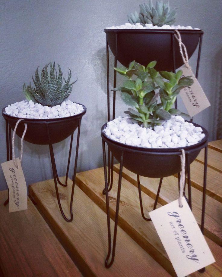 Wire pots with succulents! #greenery #greeneryartofplants #succulents #wire #chania #crete