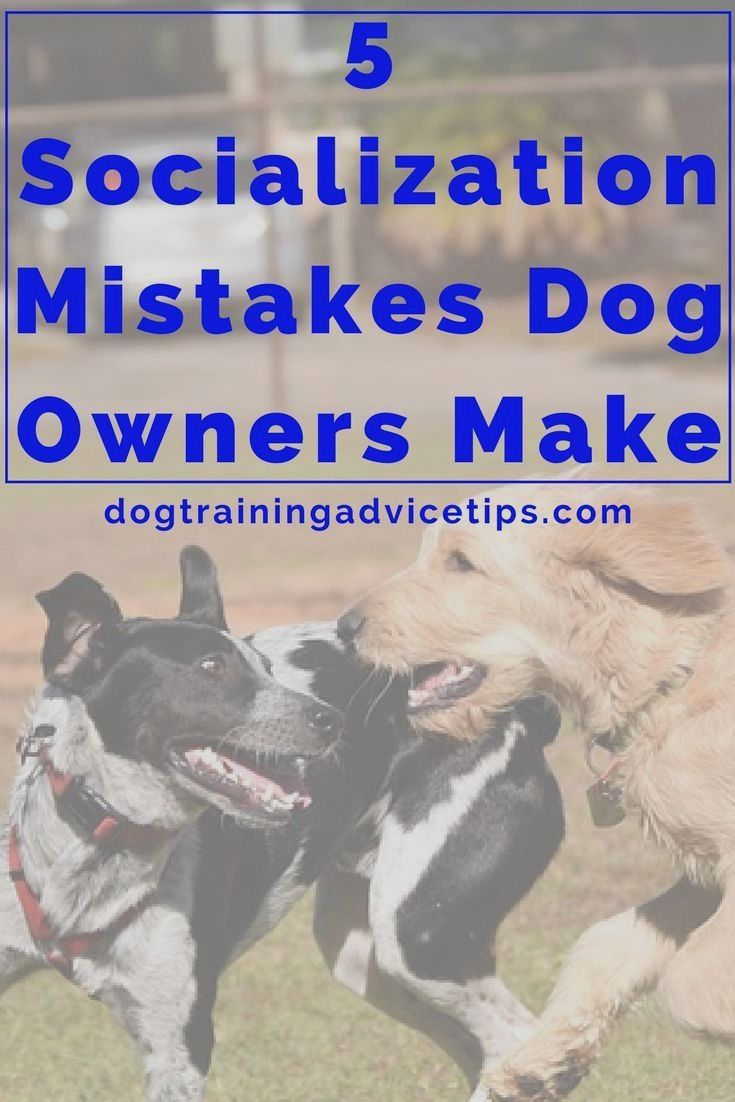 Dog Obedience Training Tampa Florida Doglovers Puppytraining