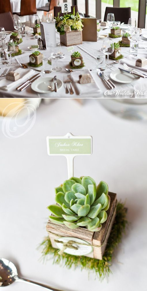 What's more adorable than a succulent bomboniere in a rustic wooden box? Claire, these could be place cards, bomboniere and table decorations all in one!!!