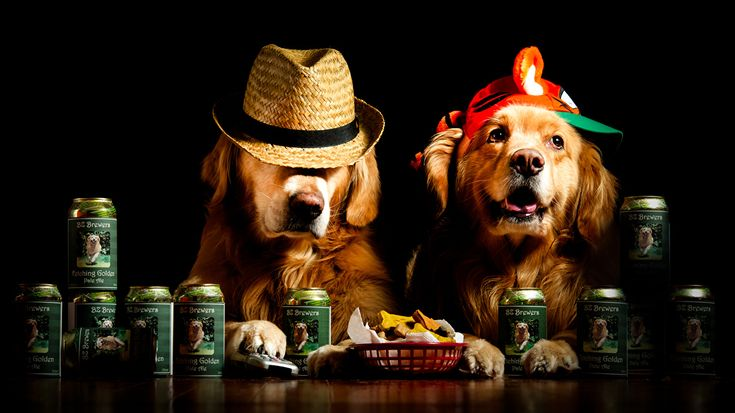 Foto Retriever Hunde Lustige 2 Der Hut Tiere Schwarzer Hintergrund Zwei