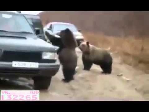 Медведи из России  При просмотре держи живот