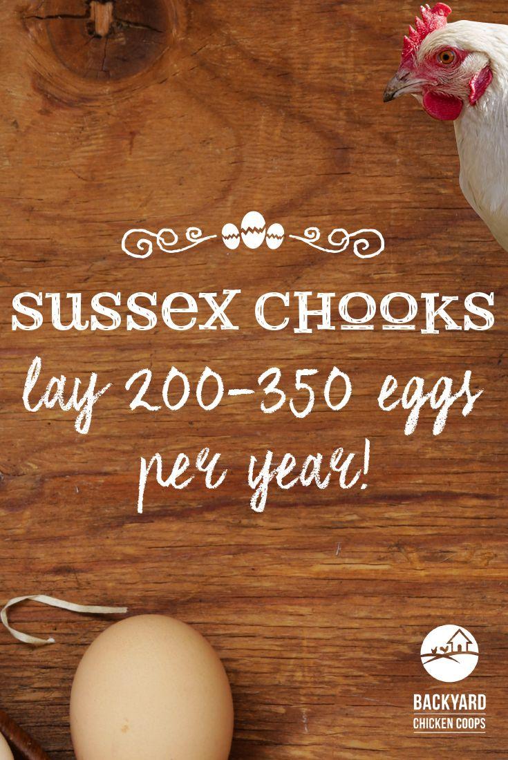 best 25 sussex chicken ideas on pinterest