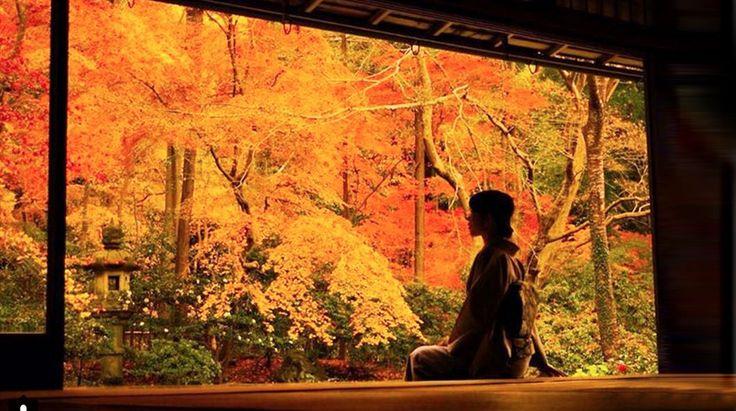 """清水寺に高台寺、永観堂、醍醐寺…、秋の京都を彩る紅葉の名所は挙げればキリがありません。が、中でもココ、瑠璃光院は特別な場所。詳しい理由は後ほど説明するとして、まずはその絶景をご堪能あれ。知る人ぞ知る""""幻の紅葉""""って?叡山電鉄、八瀬比叡山口駅より高野川の清流に沿って歩き、吊り橋を渡ると、山門が迎えてくれます。瑠璃色に輝く浄土の世界を表わした「瑠璃の庭」。その名庭を二階から望む―。柱を額縁に見立..."""