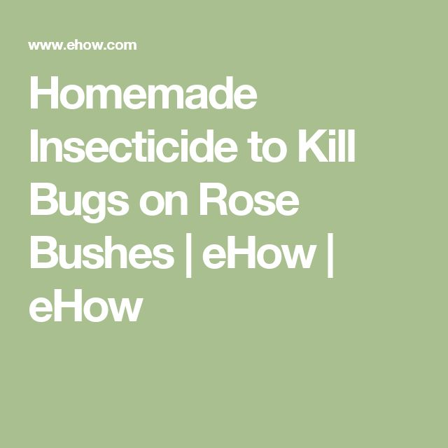 Homemade Insecticide to Kill Bugs on Rose Bushes | eHow | eHow
