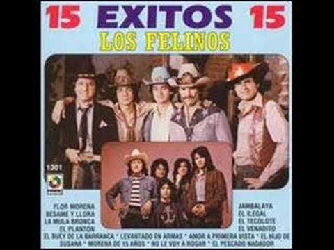 Battle of the Bands: Los Felinos vs Harry Connick Jr