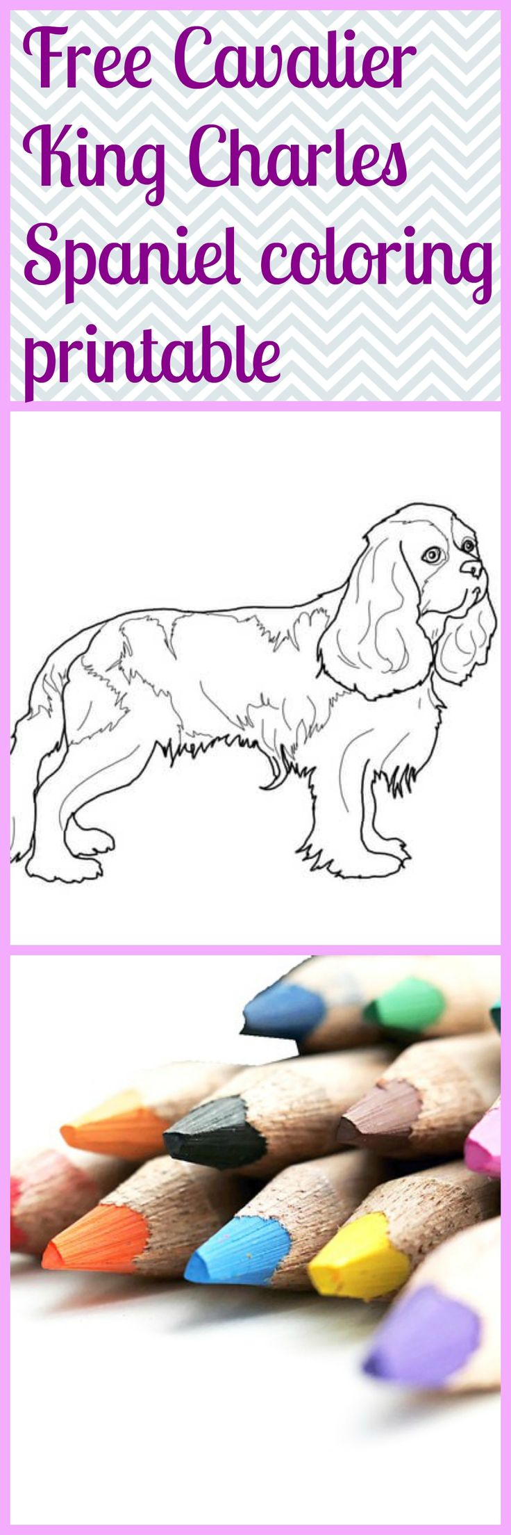 23 best contemporary realistic fiction images on pinterest free printable boarding application dog report card cavalier king charles coloring page nvjuhfo Image collections