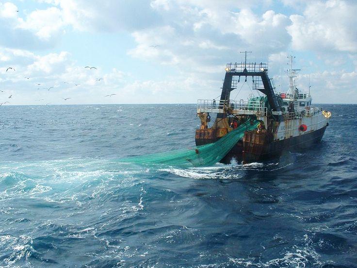 Disparitions d'espèces, destruction des écosystèmes marins... le chalutage en eaux profondes sera bientôt interdit dans les eaux européennes.