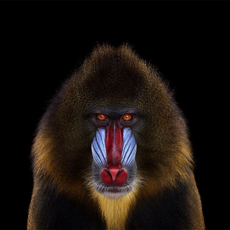Affinity: Amazing Animal Portraits by Brad Wilson