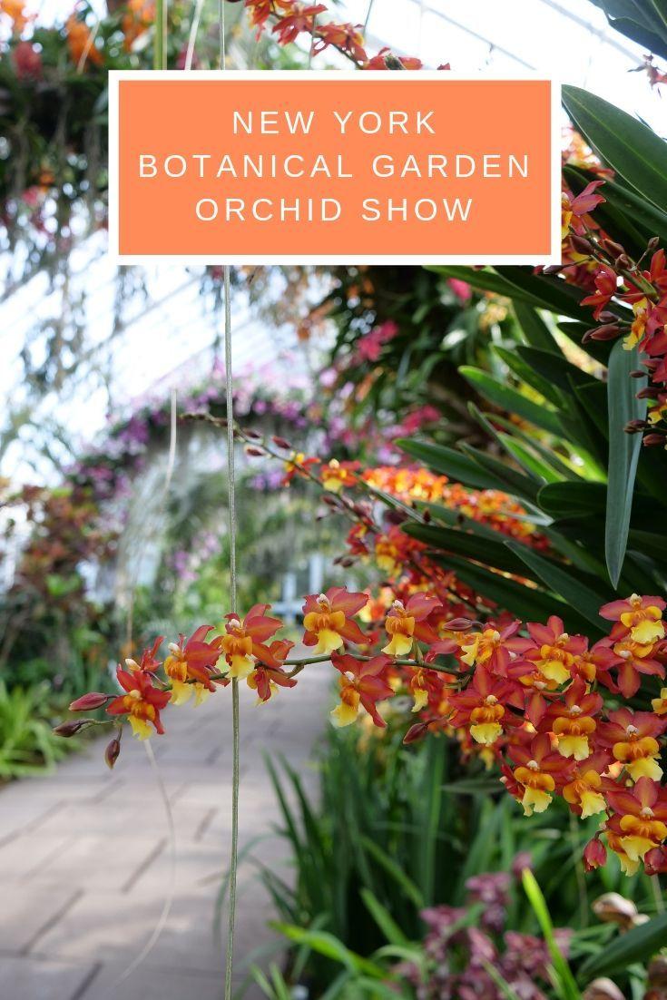 New York Botanical Garden Orchid Show Bronx Guide Botanical