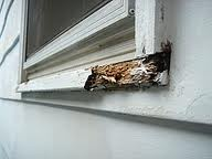 Wooden Window Sills And Frames Are Subject To Rot When