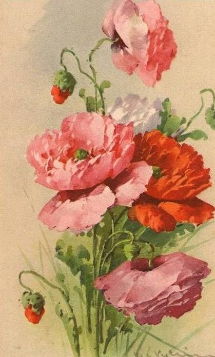 Catherine Klein, Poppies: