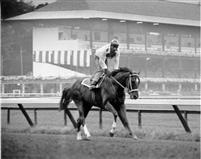 Secretariat - Triple Crown Winner 1973.....3 triple crown winner in the 70's (the decade I was born - no wonder i am such a fan)