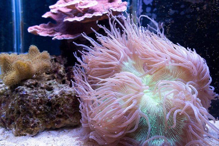 1000 images about worlds most beautiful aquarium 39 s and for Aquarium elegance