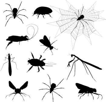 #Silhouettes #creepy #insects