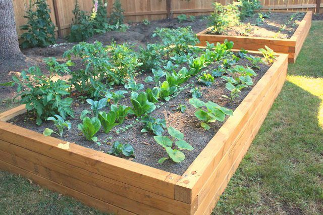 a0ba20fd7de45a55441e5952310432be--raised-bed-gardens-raised-beds Veggie Planters At Home Depot on square planters home depot, garden boxes home depot, planters printable coupon, planters at costco, planters at ikea, underground downspouts home depot, strawberry pots home depot, planters at disney, planters at menards, large ceramic planters home depot, planters at kmart, planter boxes home depot, planter box liners home depot, barrel planters home depot,