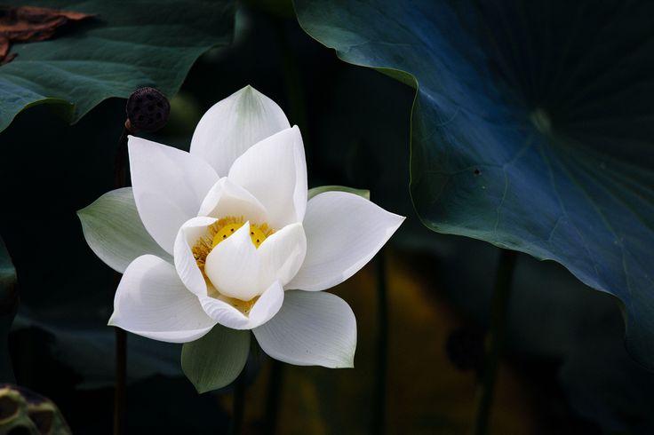 https://flic.kr/p/fuExKi | 真夏の匂いの花