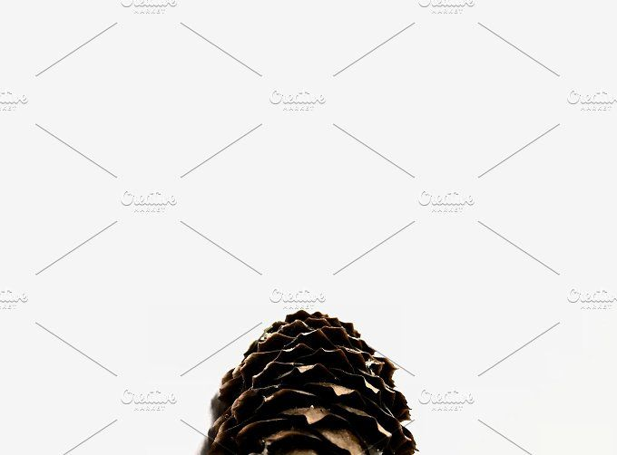 Pinecone by Ephy on @creativemarket