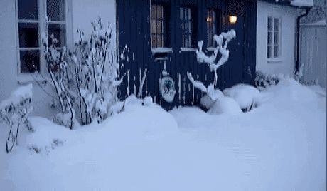 Diese Katzen haben den Schnee etwas unterschätzt - watson